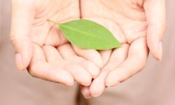 両手のひらと緑の葉